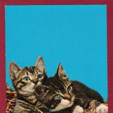 Postales: POSTAL ANTIGUA DE ANIMALES - GATOS PRECIOSOS. Lote 11676780