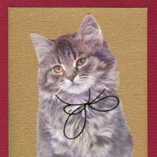 Postales: POSTAL ANTIGUA DE ANIMALES - GATO CON LAZO DORADO. Lote 11676787