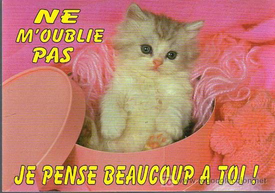 Postal Ne Moublie Pas Je Pense Beaucoup A Toi