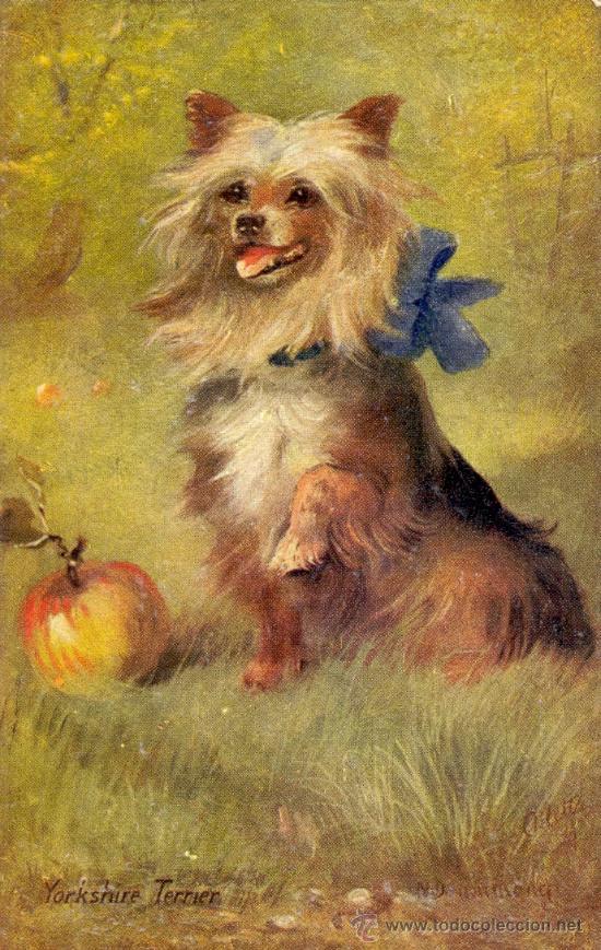 PERRO. RAZA YORKSHIRE TERRIER. DIBUJO. POSTAL COLOR INGLESA, C. 1925. (Postales - Postales Temáticas - Animales)