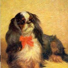 Postales: PERRO. RAZA PRICE CHARLES SPANIEL. DIBUJO. POSTAL COLOR INGLESA, C. 1925. . Lote 26314501