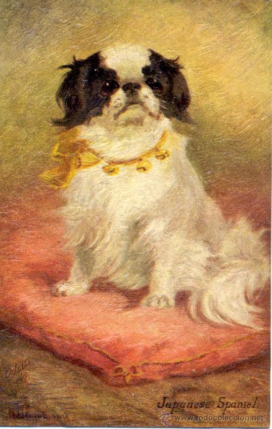 PERRO. RAZA JAPANESE SPANIEL. DIBUJO. POSTAL COLOR INGLESA, C. 1925. (Postales - Postales Temáticas - Animales)
