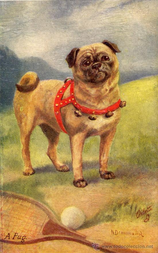 PERRO. RAZA PUG. DIBUJO. POSTAL COLOR INGLESA, C. 1925. (Postales - Postales Temáticas - Animales)