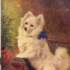 Postales: PERRO. RAZA WHITE PAMERAMAN. DIBUJO. POSTAL COLOR INGLESA, C. 1925. . Lote 26139359