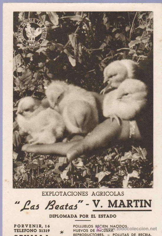 TARJETA POSTAL ANTIGUA DE ANIMALES. REVERSO NO DIVIDIDO (Postales - Postales Temáticas - Animales)