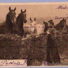 Postales: TARJETA POSTAL ANTIGUA DE ANIMALES. REVERSO NO DIVIDIDO. Lote 12170241