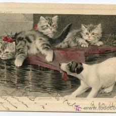 Postales: POSTAL DE PERRO Y GATO. GRABADA B. COBBE. UN INTRU. CIRCULADA A SANTANDER EN 1910.. Lote 25834325