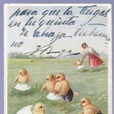 Postales: TARJETA POSTAL ANTIGUA DE ANIMALES. REVERSO NO DIVIDIDO.. Lote 13080013