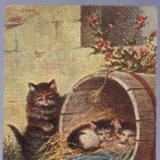 Postales: TARJETA POSTAL ANTIGUA DE ANIMALES. REVERSO NO DIVIDIDO.. Lote 13080063