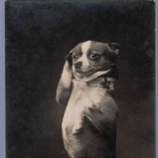 Postales: TARJETA POSTAL ANTIGUA DE ANIMALES. . Lote 13080107