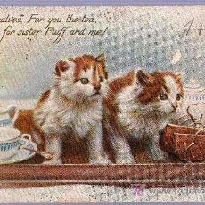 Postales: TARJETA POSTAL ANTIGUA DE ANIMALES. GATITOS. TUCK´S POST CARD. Lote 13135587