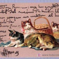 Postales: TARJETA POSTAL FOTOGRAFICA ANTIGUA DE ANIMALES. GATOS.. Lote 13136606