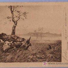 Postales: TARJETA POSTAL FOTOGRAFICA ANTIGUA DE ANIMALES. REVERSO NO DIVIDIDO.. Lote 13136694