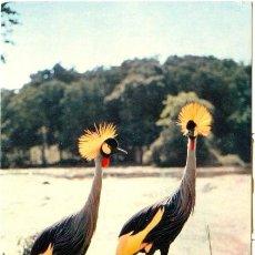Postales: FAUNA AFRICANA. GRULLAS CORONADAS. GRUES COURONNÉES. Lote 16895761