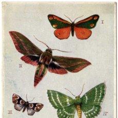 Postales: MAGNIFICA POSTAL DE MARIPOSA - CONJUNTO DE CINCO MARIPOSAS VOLANDO - EDITADA EN INGLATERRA . Lote 18488469
