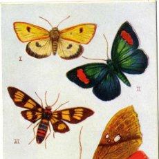 Postales: MAGNIFICA POSTAL DE MARIPOSA - CONJUNTO DE CUATRO MARIPOSAS VOLANDO - EDITADA EN INGLATERRA. Lote 18488471