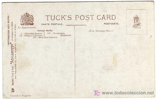 Postales: REVERSO DE LA POSTAL - Foto 2 - 18488471