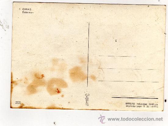 Postales: POSTAL SIN CIRCULAR,PERRO DOBERMAN.VER FOTO ADICIONAL - Foto 2 - 18146710