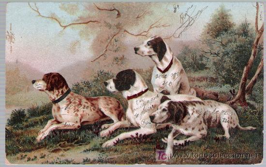 POSTAL ALEMANA. FRANQUEADA Y FECHADA EN SEVILLA EN 1902. (Postales - Postales Temáticas - Animales)