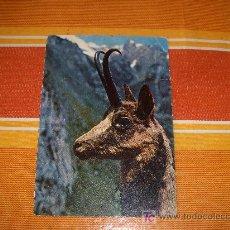 Postales: POSTAL TEMÁTICA DE ANIMALES, REBECO TROFEO ABADIAS. EDICIONES SICILIA 1967, TARJETA CIRCULADA. Lote 19104125