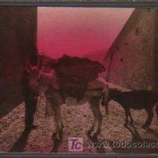 Postales: CURIOSA POSTAL DE UNOS ASNOS ASNO -BURRO . Lote 19675019