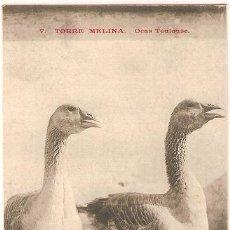 Postales: 3336 - ANTIGUA POSTAL - TORRE MELINA - OCAS TOULOUSE. Lote 21721893