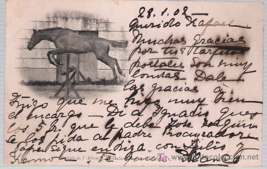 CABALLO SASLTANDO. FRANQUEADO Y FECHADO EN IRÚN 30-ENERO-1902. (Postales - Postales Temáticas - Animales)