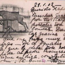 Postales: CABALLO SASLTANDO. FRANQUEADO Y FECHADO EN IRÚN 30-ENERO-1902.. Lote 20939314
