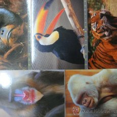 Postales: 5 POSTALES ZOO BARCELONA. LOTE DE CINCO POSTALES ANIMALES DEL ZOO DE BARCELONA. COPITO DE NIEVE.. Lote 27630543