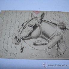 Postales: BONITA POSTAL. CABEZA DE CABALLO. S. B. VIENNA. CIRCULADA EN 1903. Lote 25146922