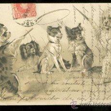 Postales: TARJETA POSTAL DE ANIMALES.. Lote 26405535