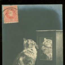 Postales: TARJETA POSTAL DE ANIMALES.. Lote 26405621