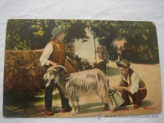 """POSTAL.- """"ORDENHANDO UNA CABRA PORTUGAL """". CIRCULADA, ESCRITA Y FECHADA EL 4-IV-1910 (Postales - Postales Temáticas - Animales)"""