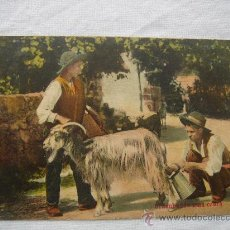 """Postales: POSTAL.- """"ORDENHANDO UNA CABRA PORTUGAL """". CIRCULADA, ESCRITA Y FECHADA EL 4-IV-1910. Lote 26421568"""