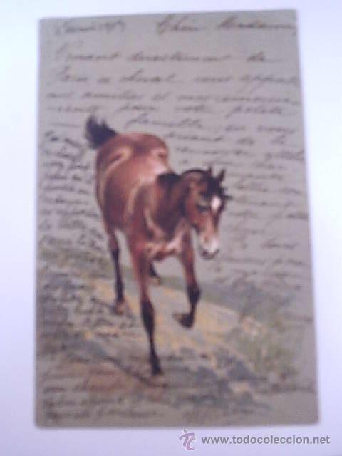 POSTAL ANTIGUA DE CABALLO-CARTE POSTALE-FRANCESA CIRCULADA 1903 (Postales - Postales Temáticas - Animales)