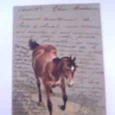Postales: POSTAL ANTIGUA DE CABALLO-CARTE POSTALE-FRANCESA CIRCULADA 1903. Lote 28134960