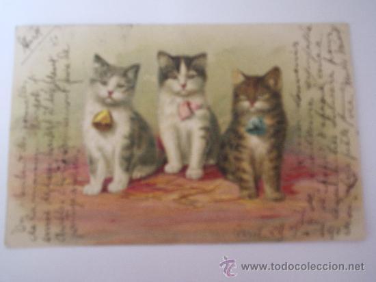 POSTAL ANTIGUA GATOS-CARTE POSTALE-FRANCESA CIRCULADA 1903 (Postales - Postales Temáticas - Animales)
