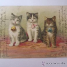 Postales: POSTAL ANTIGUA GATOS-CARTE POSTALE-FRANCESA CIRCULADA 1903. Lote 28134996