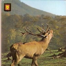 Postales: POSTAL A COLOR SERIE 3057 A ANIMALES. Lote 28195315