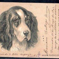 Postales: TARJETA POSTAL DE ANIMALES. PERRO. Lote 28517310