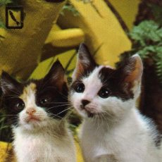 Postales: POSTAL ANIMALES GATO POSTALES ESCUDO DE ORO ESCRITA CIRCULADA SELLO SERIE 3139/3. Lote 28938188