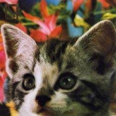 Postales: POSTAL ANIMALES GATO ESCRITA CIRCULADA SELLO POSTALES ESCUDO DE ORO SERIE 3113/4. Lote 28938219