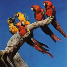 Postales: SAFARI PARK COSTA BLANCA VERGEL ALICANTE ESCRITA CIRCULADA SELLO. Lote 28941471