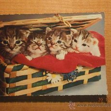 Postales: ANTIGUA POSTAL GATOS ESCRITA. Lote 29421353