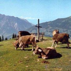 Postales: AUSTRIA. PAISAJE CON VACAS POSTAL CIRCULADA. Lote 29773529