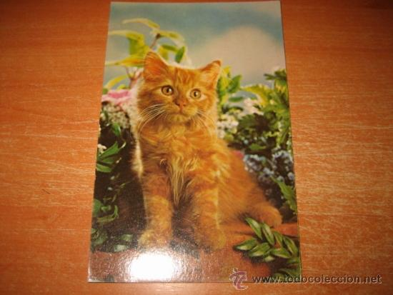 GATITO (Postales - Postales Temáticas - Animales)
