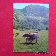 Postales: POSTAL VACA CON TERNERO S/C A-11. Lote 32267393