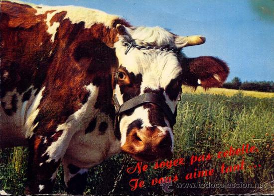 VACA FRANCESA POSTAL CIRCULADA 1968 (Postales - Postales Temáticas - Animales)
