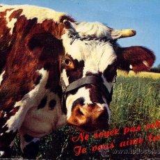 Postales: VACA FRANCESA POSTAL CIRCULADA 1968. Lote 32601359