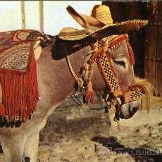 Postales: POSTAL BURRO TIPICO ANDALUZ. Lote 33812056
